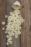 Kamomillar på en träbakgrund Fotografering för Bildbyråer