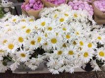 Kamomillar som är till salu i blommamarknad moscow russia arkivbilder