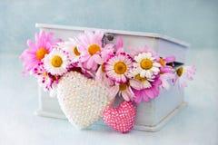 Kamomillen blommar i en ask Arkivfoto