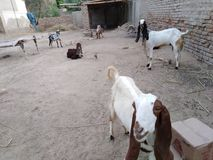 Bakri editorial stock image  Image of found, village - 132089039
