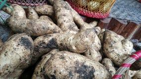 Kamote (patata dolce) Fotografia Stock