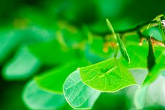 kamouflage Fotografering för Bildbyråer