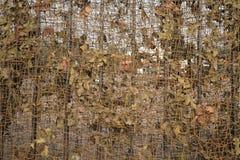 Kamouflage Arkivfoto