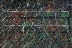 Kamouflage förtjänar för hidding i natur Royaltyfri Foto