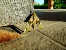 Kamouflagefjäril Royaltyfri Fotografi