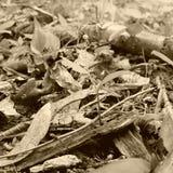 Kamouflagegroda Arkivbilder