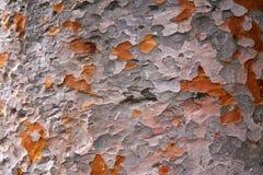 Kamouflagemodell på trädskäll Royaltyfri Foto