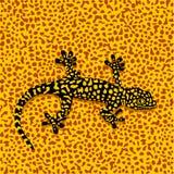 kamouflagesalamander vektor illustrationer