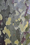kamouflagetree Arkivbild