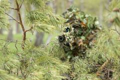 Kamouflerad prickskytt i skogen royaltyfri bild