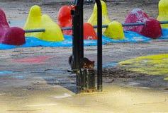 Kamouflerat mellan färger fotografering för bildbyråer