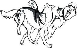 Kamp av hundkapplöpning Vektor Illustrationer