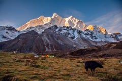 Kamp onder MT MaKaLu in Tibet Stock Foto's