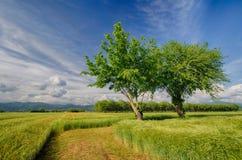 Kampagne mit Rasen und Bäumen Stockbilder