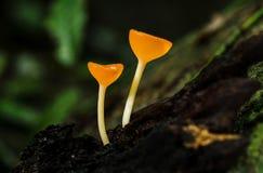 Kampagne mit zwei Pilzen Stockbilder