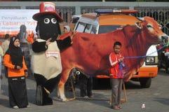 Kampania 'poświęcać' naprzeciw Eid al-Adha świętowania w Indonezja Obraz Royalty Free