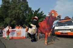 Kampania 'poświęcać' naprzeciw Eid al-Adha świętowania w Indonezja Fotografia Royalty Free