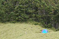 Kampeerterrein en bos stock foto