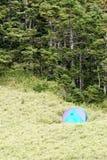 Kampeerterrein en bos Stock Afbeeldingen