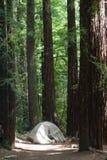 Kampeerterrein en Tent bij het Grote Park van de Staat van Bassincalifornische sequoia's royalty-vrije stock fotografie