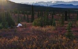Kamperend in het Nationale park van Denali, die MT Mckinley onder ogen zien royalty-vrije stock fotografie