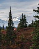 Kamperend in het Nationale park van Denali, die MT Mckinley onder ogen zien royalty-vrije stock foto