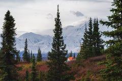 Kamperend in het Nationale park van Denali, die MT Mckinley onder ogen zien stock fotografie