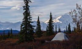 Kamperend in het Nationale park van Denali, die MT Mckinley onder ogen zien stock foto's