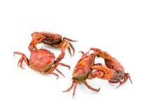 Kampf der Krabbe Stockbild