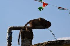 Kampf der wild lebenden Tiere im konkreten Dschungel stockfoto