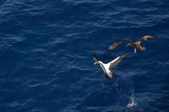 Kampf für Fische Stockfoto
