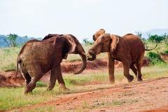 Kampf von Elefanten Lizenzfreies Stockbild