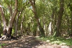 Kampfer-Wald, Südafrika lizenzfreie stockfotos