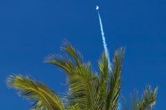 Kampfflugzeughimmel, der zum blauen Himmel auf Palmehintergrund hochschnellt Stockbilder