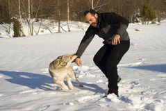 Kampfhund Lizenzfreie Stockfotografie
