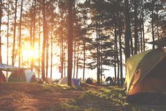 Kampieren und Zelt unter dem Kiefernwald im Sonnenuntergang bei nördlich von Thailand Stockfoto