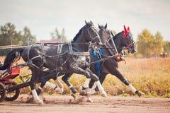 Kampioenschap van de Russische Troïka van Rusland Royalty-vrije Stock Fotografie