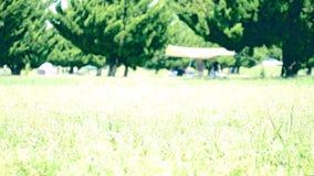 Kamplandschap in het park stock videobeelden