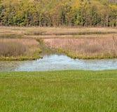 Kampoosa Bog and pond wetlands. Area drainage basin of critical concern, hills and blue sky Springtime , Stockbridge Berkshires Massachusetts royalty free stock images