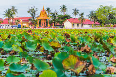 Kampot. The Lotus pond in Kampot, Cambodia. Contemporary park recreation area in the city center of Kampot. Green leaves and Buddhist architecture and modern Stock Photos