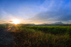 Kampung Sangkir, Kota克卢德火山,亚庇,沙巴,马来西亚Padd 库存图片