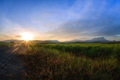 Kampung Sangkir, Kota Kelud, Kota Kinabalu, Sabah, Malásia Padd Imagens de Stock