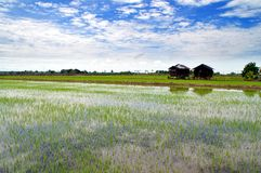 Kampung sawah Royalty Free Stock Photo