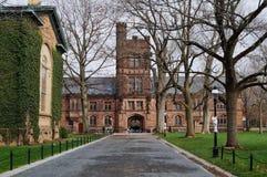 Kampus bluszcza liga uniwersytet princeton Zdjęcie Stock