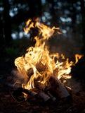 Kampvuren van brandhout Royalty-vrije Stock Afbeelding