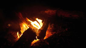 Kampvuur van de Takkenbrandwond bij Nacht in het Bos stock videobeelden