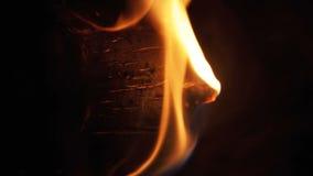 Kampvuur van de Takkenbrandwond bij Nacht in het Bos stock video
