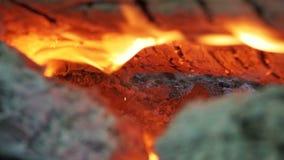 Kampvuur van de Takkenbrandwond in het Bos stock video