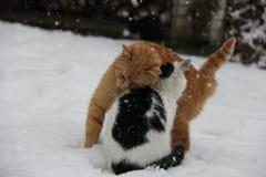 Kamratskap mellan katter royaltyfri foto