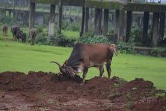 Kamshet in Pune-Maharashtra in Moesson stock afbeelding